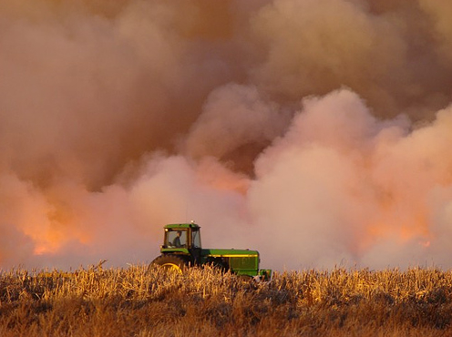 Burning stubble up close